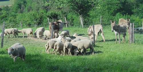 Agriculteurs Assieu